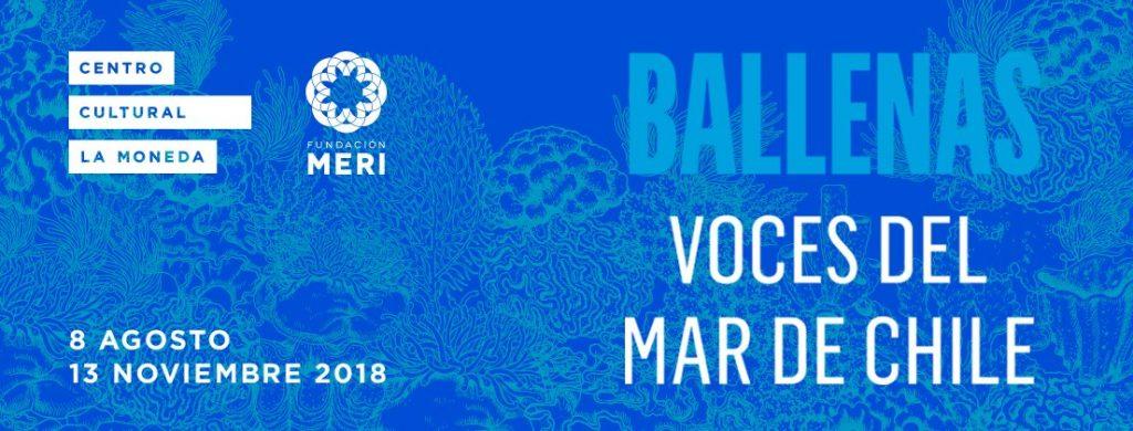 Ballenas, Voces del mar de Chile