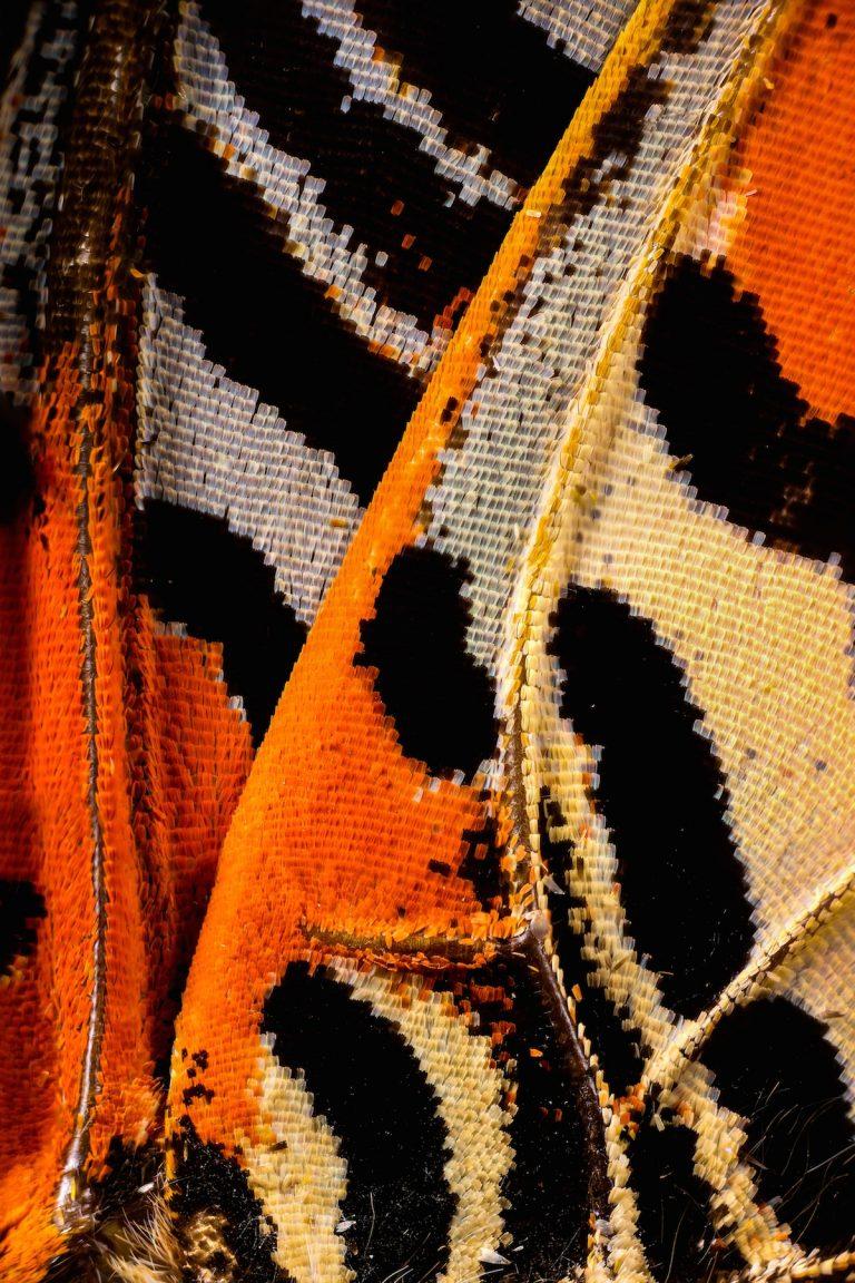 Alas de Mariposas registradas a través de un lente de microscopio