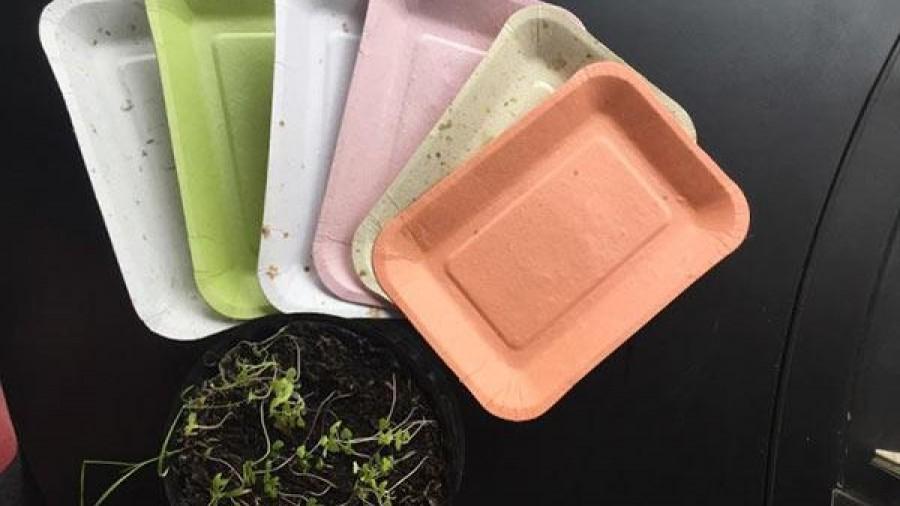 Platos hechos de maíz y piña que germinan después de usarlos