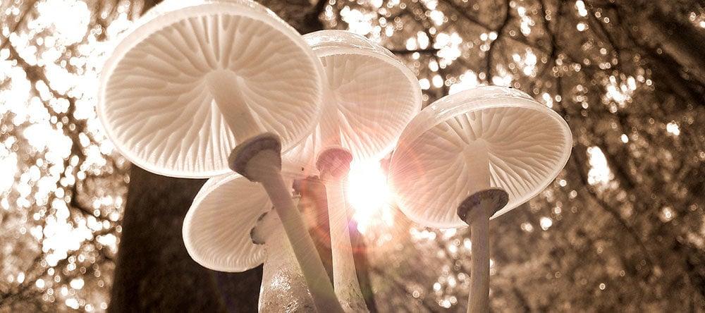 """""""Fantastic Fungi"""" documental sobre el mágico mundo de los hongos"""